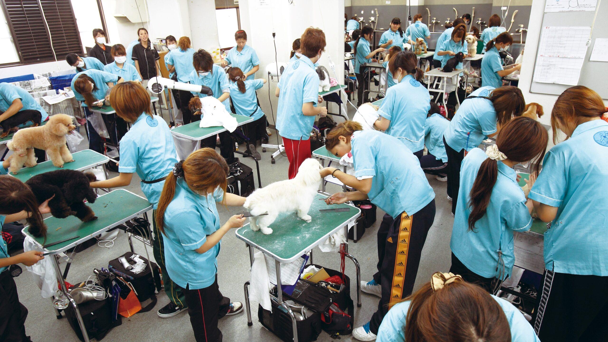 ナンバペット美容学院